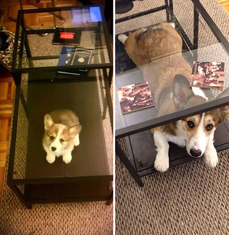 Then and Now Dog
