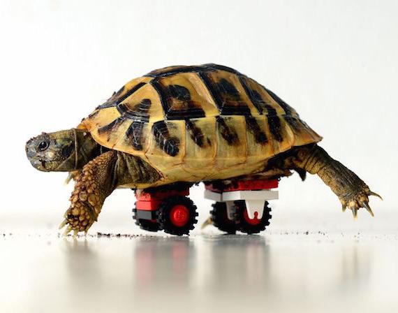 Tortoise LEGO
