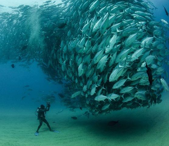 Tuna Swarm