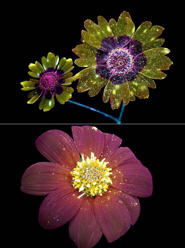 UV Light Flower
