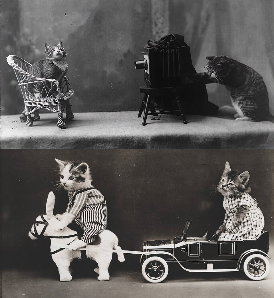 Vintage Photos Cats