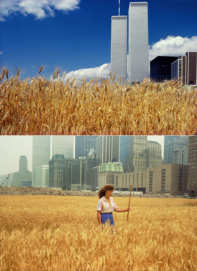 Wheat Land NYC