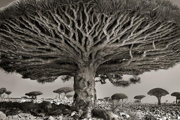 Worlds Oldest Tree