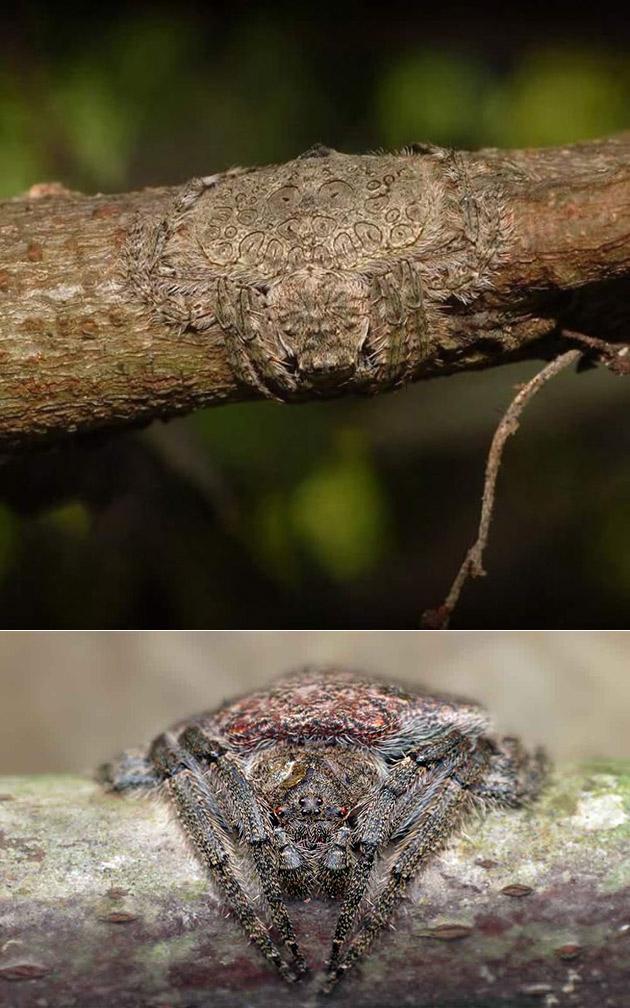 Wrap Around Spider